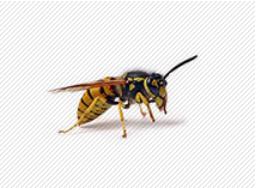 Insecten met vleugels bestrijden determinatietabel
