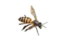 Hoornaar bestrijden wespenbestrijding