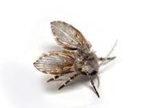 Motmuggen bestrijden vliegende insecten