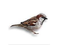 Mussen bestrijden vogelwering