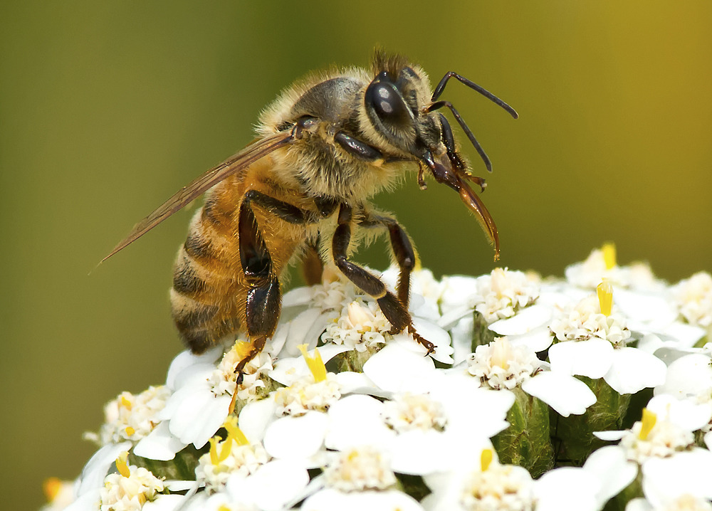 Bijen bijennesten oplossingen
