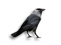 Kauwen bestrijden wering vogels