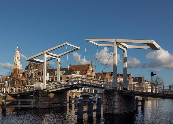 Haarlem ongediertebestrijding dierplaagbeheersing attack
