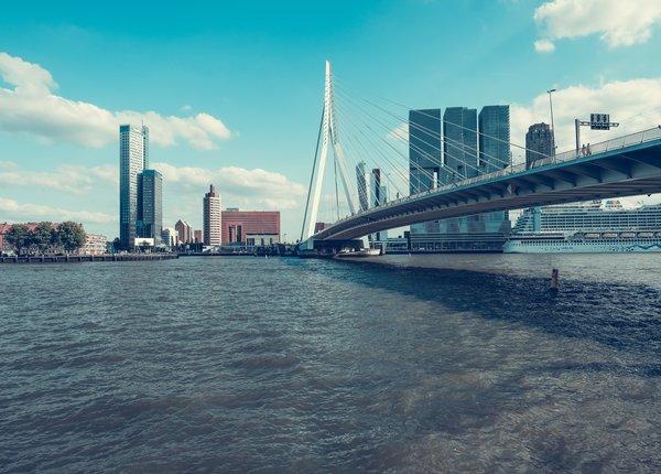 Ongediertebestrijding Rotterdam