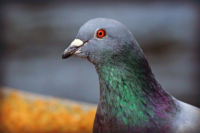 Duiven bestrijding vogelwering