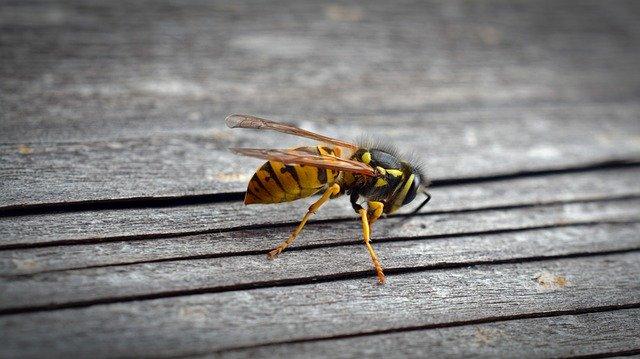 wespennest in huis wespenbestrijding