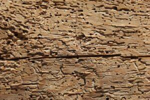 houtworm houtwormspecialist gaten houtaantasters