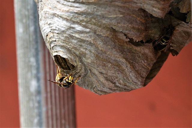 Wespenbestrijding schagen