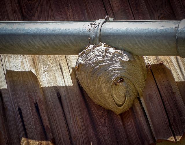 Wespenbestrijding Alkmaar wespennest