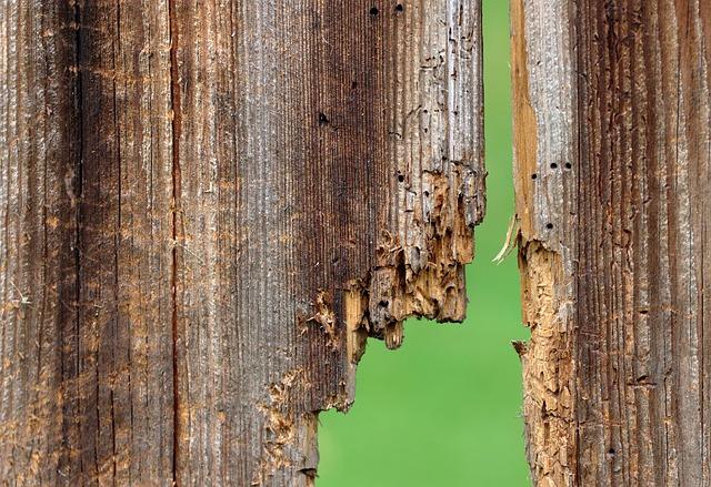 houtworm herkennen