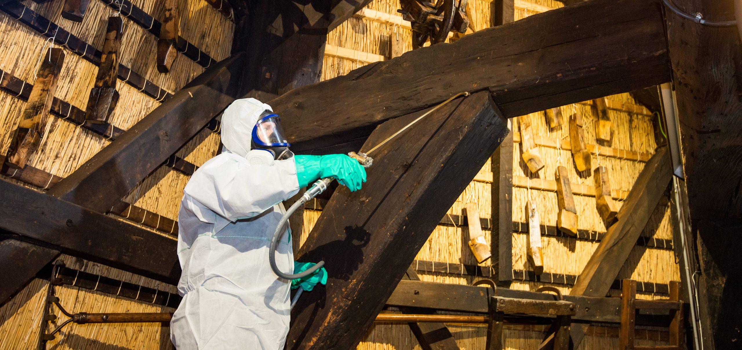 Behandeling houtwormbestrijding houtworm bestrijden
