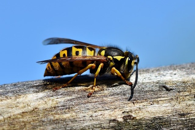 Wespenbestrijding Purmerend