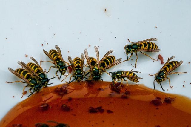 Wespenbestrijding enkhuizen