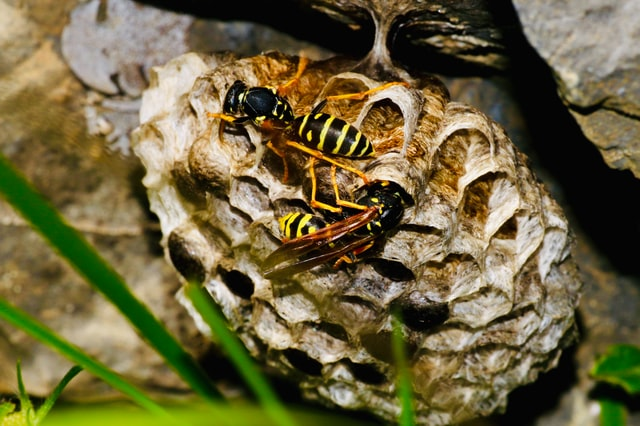 wespenbestrijding hoofddorp wespennest