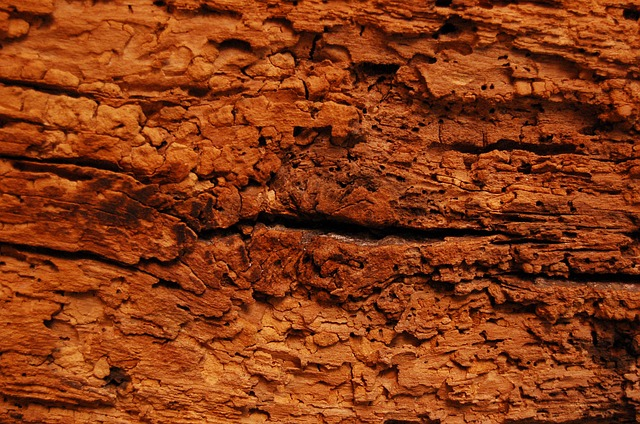 Houtworm Heerhugowaard houtaantasters bestrijden